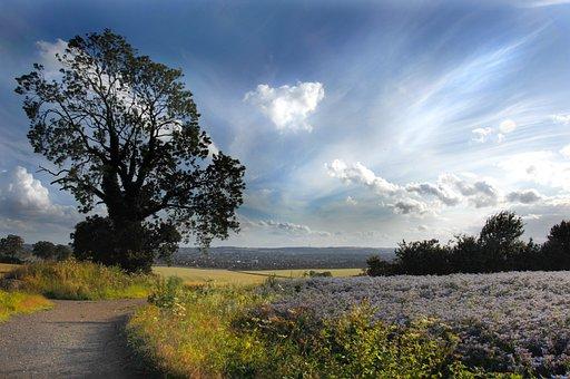 Landscape, Fields, Luton, England
