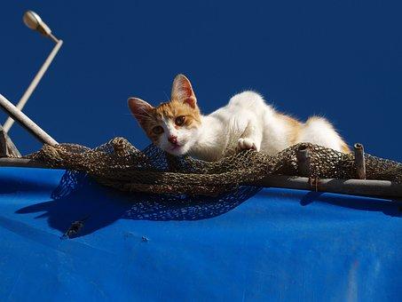 Cat, Feline, Ambush