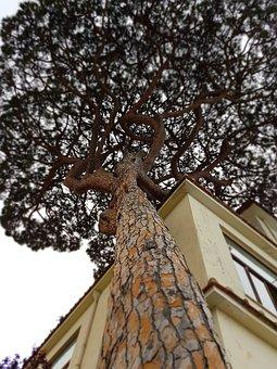 Sorrento, Home, Gallery, Tree, Italy