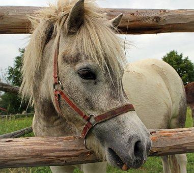 Horse Head, Head, Horse, Pony, Mane, Eyes, Ears