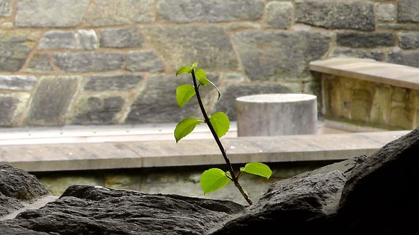 Live, Stone, Stone Wall, Grow, Plant, Sprout, Leaves