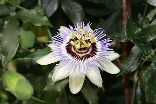 Passivated, Flower, Nature, Close