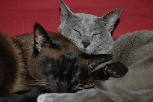 Kitten, M, Cat, Animal, Feline, Are You Tired Of