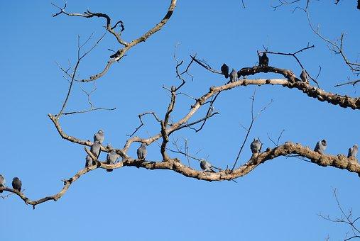 Landscape, Cristina Enea, Tree, Plants