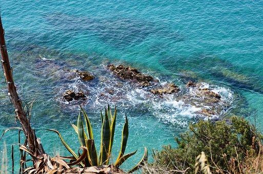 Agave, Sea, Stones, Coast, Rock, Blue, Nature