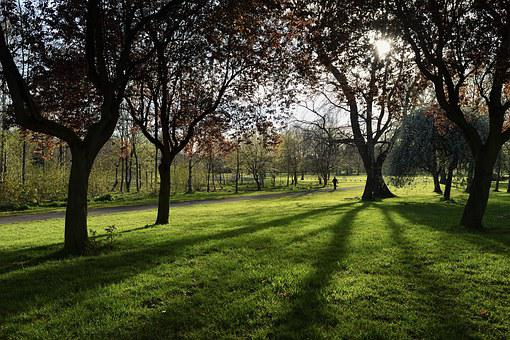 Lurgan-northern Ireland, Park, Tree, The Sun