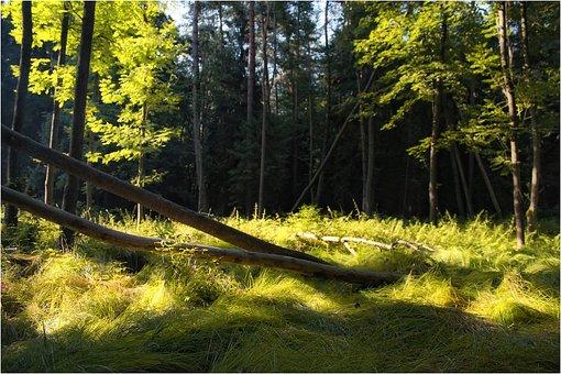 Forest, Nature, Tree, Litter, Roslinność, Then, Plants