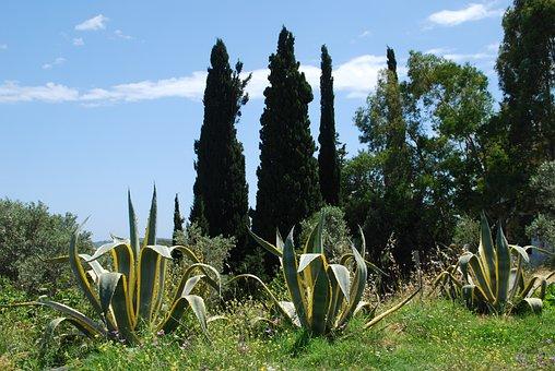 Samos, Greece, Summer, Vacations, Greek Island, Agave