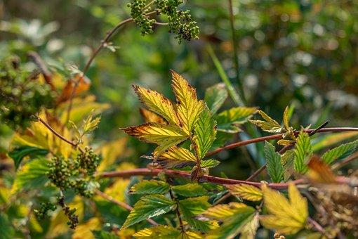 Meadowsweet, Plant, Wild Flower, Wild Plant, Bloom