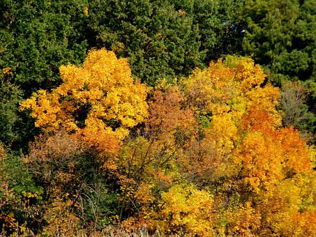 Trees, Autumn, Landscape, Leaf, Feerie, Yellow