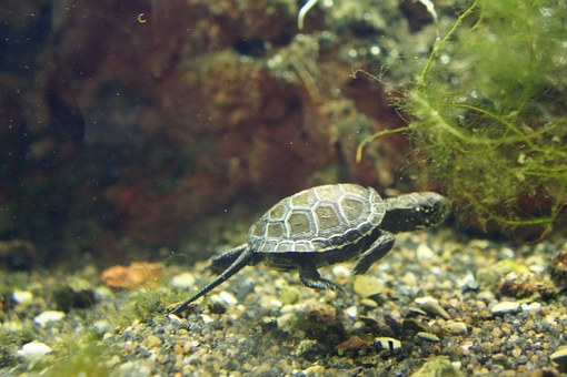 Turtle, Baby, Animals