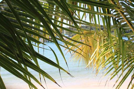 The Island Of Koh Kood, Palm Trees, Water, Beach