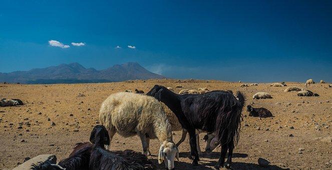 Turkey, Goat, Cappadogia
