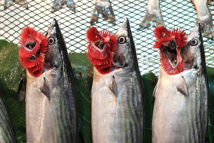 Turkey, Istanbul, Fish, Market, Palamut