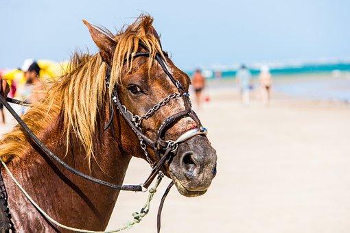 Horse, Anima, Beach, Cruelty To Animals