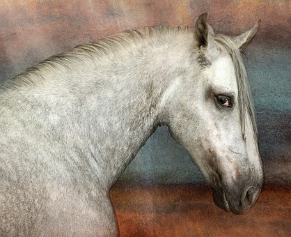 Horse, Andalusians, Pre, Mold, White, Animal