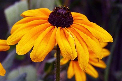 Daisy, Flower, Garden, Nature, Yellow, Summer, Floral