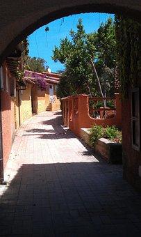Island Lily, Argentario, Gashes, Summer, Arc, Tuscany