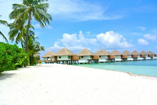 Maldives, Beach, Coconut, White Sand, Resort, Holiday