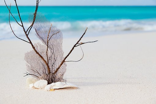 Beach, Beauty, Blue, Caribbean, Concept, Coral, Exotic