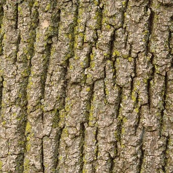 Bark, Tree, Nature, Texture, Wood, Brown, Trunk, Rough