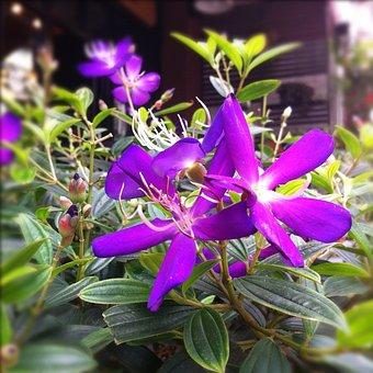 Purple Flowers, Purple, Flowers, Auspicious Purple