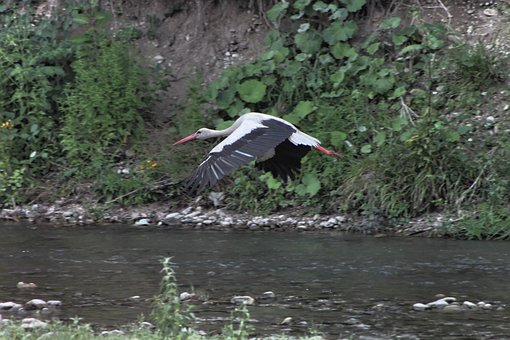Bed, River, Stork, Water, White, Birds, Gray Bed