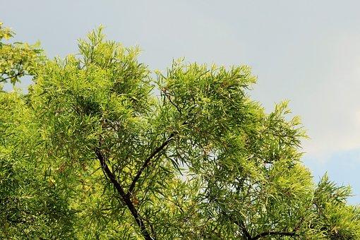 Sky, Overcast, Grey, Tree, Karee, Green