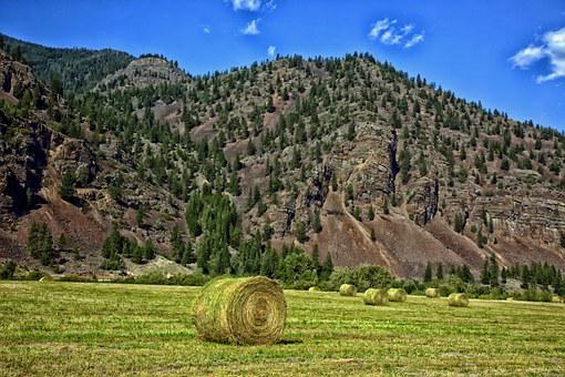 Montana, Hay Bales, Mountains, Landscape, Scenic, Farm