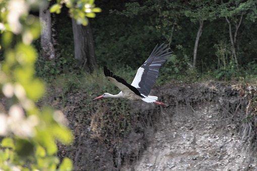 Bed, River, Stork, Water, White, Birds
