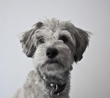 Dog, Pet, Friend, Faithful, Happy, Male, Puppy, Animal