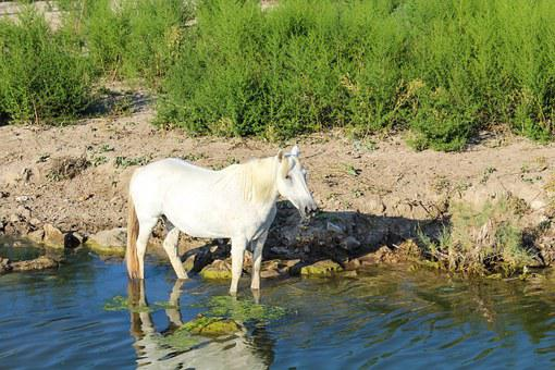 Horse, Nature, Water, River, Channel, Bach