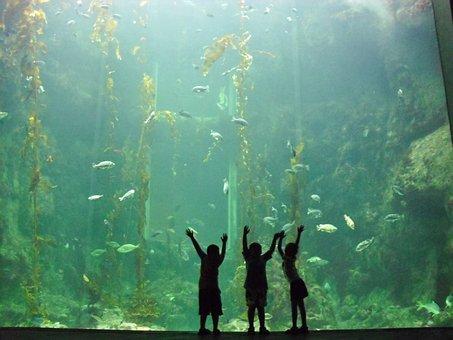 Child, Aquarium, Water, Sea, Fish, Life, Nature, Animal