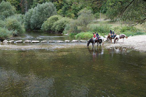 Horses, Danube, Water, Ride, Sport, Cross