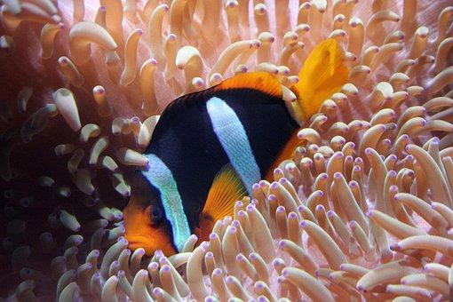 Aquarium, Sea, Dive, Fish, Tank, Clown, Tropical, Under
