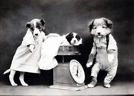 Dog, Dogs, Puppy, Dressed, Clothed, Cute, Vintage, Old