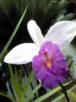 Orquidea, Forest, Mata Atlantica, Flora