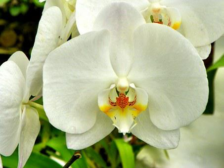 Plant, Flower, Garden, Flowers, Orchid, Yellow