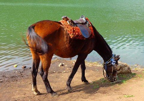 Horse, Feeding, Lake, Feed, Grass, Animal, Water