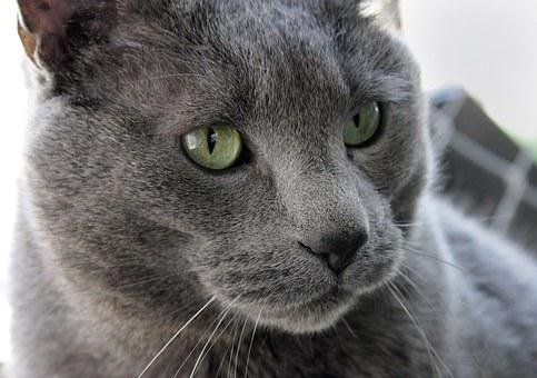 Cat, Pet, Male, Large, Gray, Rescue, Outside, Nature