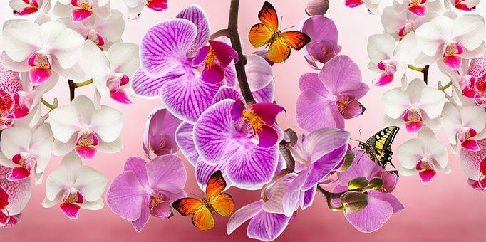 Orchids, Flowers, Garden, Orquidea, Nature, Spring