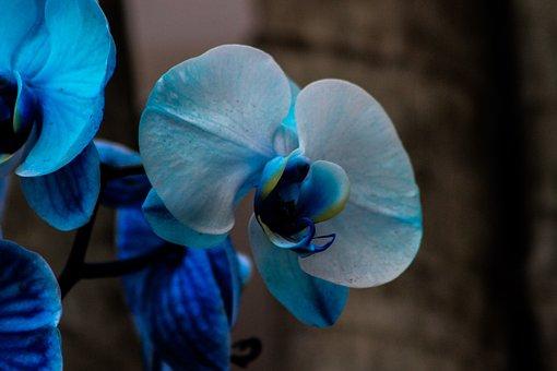 Orquidea, Flower, Orchid, Garden, Exotic Plant, Plant