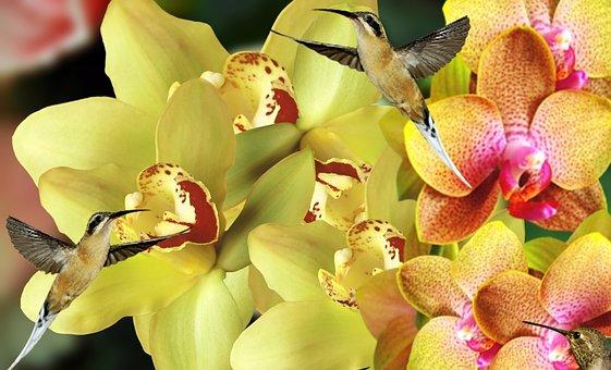Orquideas, Flowers, Garden, Plant, Nature, Orchids