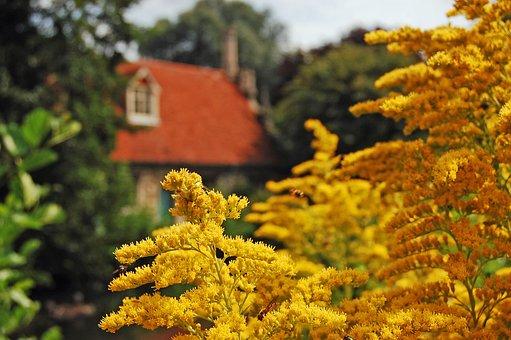 Mill, Countryside, Scene, Landscape, Rural, Nature, Sky
