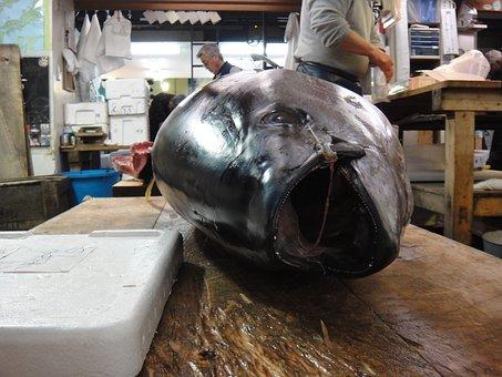 Fish, Market, Tokyo, Tsukiji, Japan, Attraction