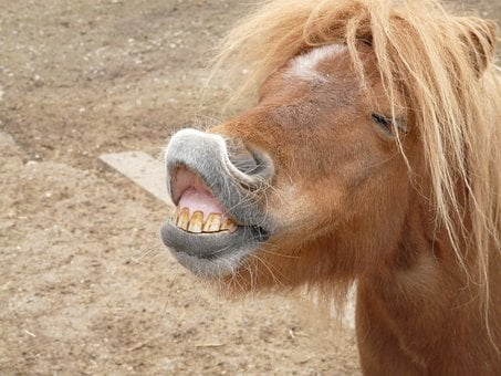 Pony, Horse, Making A Face, Funny, Tooth, Teeth, Bite