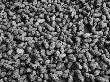 Peanut, Food, Crop, Harvest, Black And White