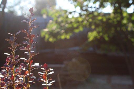 Landscape Design, Beautification, Planting Of Greenery