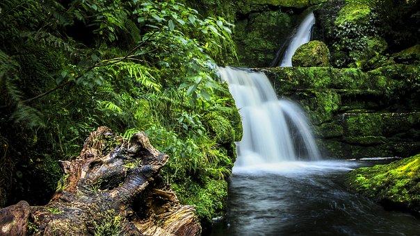 Waterfall, Bush, Catlins, New Zealand, Nature, River