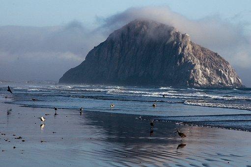 California, Nature Reserve, Pacific, Sea, Sea Birds
